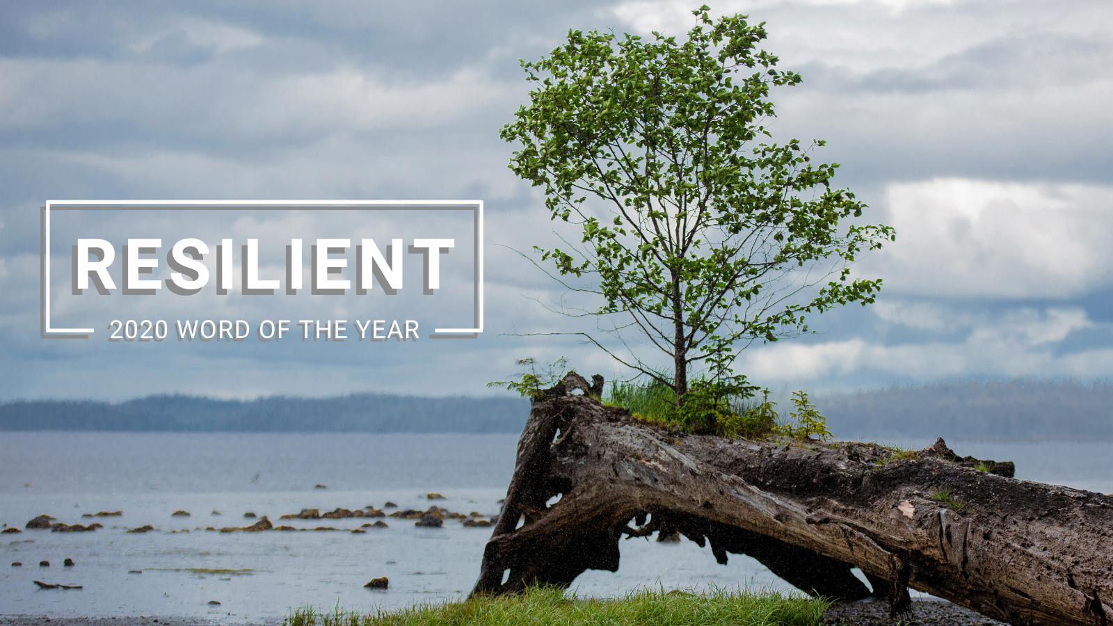 2020 Word of the Year: Resilient